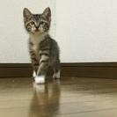 子猫3ヶ月