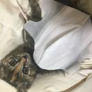 生後1ヶ月以内の可愛い子猫ちゃん♡