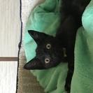 黒猫ミロくん♪