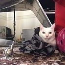 おっとりした大人の美人猫さん