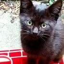 大きな目の黒子猫野家族になってください。