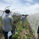 かまどで作ろう!とれたて夏野菜カレー − 埼玉県