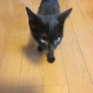【捨て猫】こげちゃ、キジトラ生後1ヶ月程