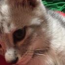もうすぐ2ヶ月の子猫
