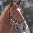 競馬、馬好きな方