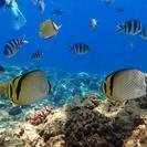 青の洞窟&熱帯魚と泳ぐシュノーケルツアー