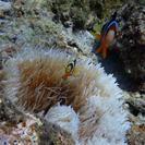 青の洞窟&熱帯魚と泳ぐシュノーケルツアー − 沖縄県