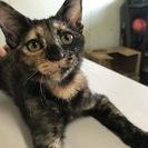 黒猫1匹 サビ猫1匹 4ヶ月よろしくお願いします。