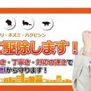 埼玉県の害獣駆除業者は【害虫インフォメーション】 害虫・害獣駆除業...