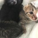 生後10日の子猫