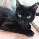 ●優しい黒猫母さん
