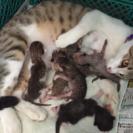 7月9日生まれ子猫 6匹