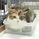 可愛いミケちゃんと子猫二匹が保健所で助けを待っています(>_<)