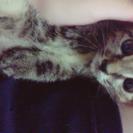 元気な猫ちゃんです