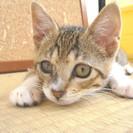 生後3ヶ月半の子猫 (募集停止中)