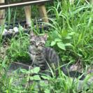 生後3ヶ月の子猫