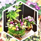 7/31 〔涼〕苔玉と生花のアレン...