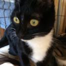 甘えん坊の黒猫ᒼᑋªⁿ♥︎
