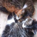 2匹、猫ミックス姉妹1歳くらいです。