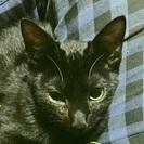 飼育困難のために放棄された黒猫ちゃん