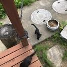 かわいい子猫 3ヶ月 5匹 黒猫ちゃんです^ ^