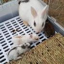 ミニ🐰のお母さんと赤ちゃんです。