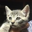 子猫の里親お願いします