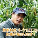 今年もやります!豊根村・坂口農園のトウモロコシ摘み取り園 生でも食...