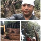 木の伐採 竹林伐採 庭の手入れ致します。埼玉県 所沢市