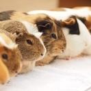 【足立区生物園】哺乳類・鳥類の飼育員募集(期間限定の契約社員)