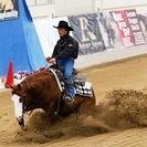 業務拡張の為 乗馬クラブ 正規スタッフ急募 住込みOK 動物、馬が...