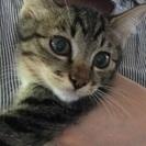 猫の赤ちゃん3ヶ月里親さん大募集