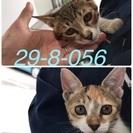 保健所収容‼︎もう時間がありません!生後4カ月の子猫二匹です