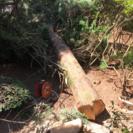 木の処分 薪などの燃料に