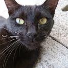 黒猫の女の子の里親様募集中です
