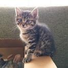 子猫のくろちゃん♀(3ヶ月)
