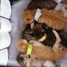 生後一ヶ月。仔猫五匹保護しました。