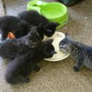生後1ヶ月の子猫達♪