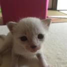 生後1週間〜2週間くらいの子猫