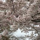 福知山・篠山・三田・宝塚・尼崎で友達作り♪(・∀・*)乂(*・∀・)ノ