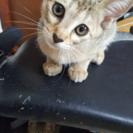 生後3ヶ月 子猫 里親募集