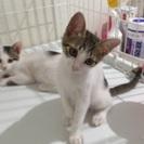 可愛い子猫の里親さん募集中