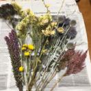 紫のお花と黄色いお花ドライフラワー 差し上げます