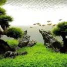 水槽レイアウト研究会