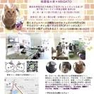 4日保護猫カフェにて、杉本彩さん出演のイベントの前準備