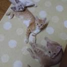お目目くりくりの猫ちゃん達です^ ^