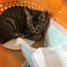 生後三ヶ月〜四ヶ月の猫