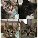 4匹の兄弟猫の里親募集中!