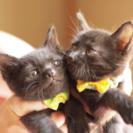 生後2ヶ月の黒猫兄弟(^^)