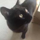 約一歳 黒猫